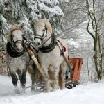 Take a sleigh ride through the snow with someone special this Valentine's Day in New Hampshire.